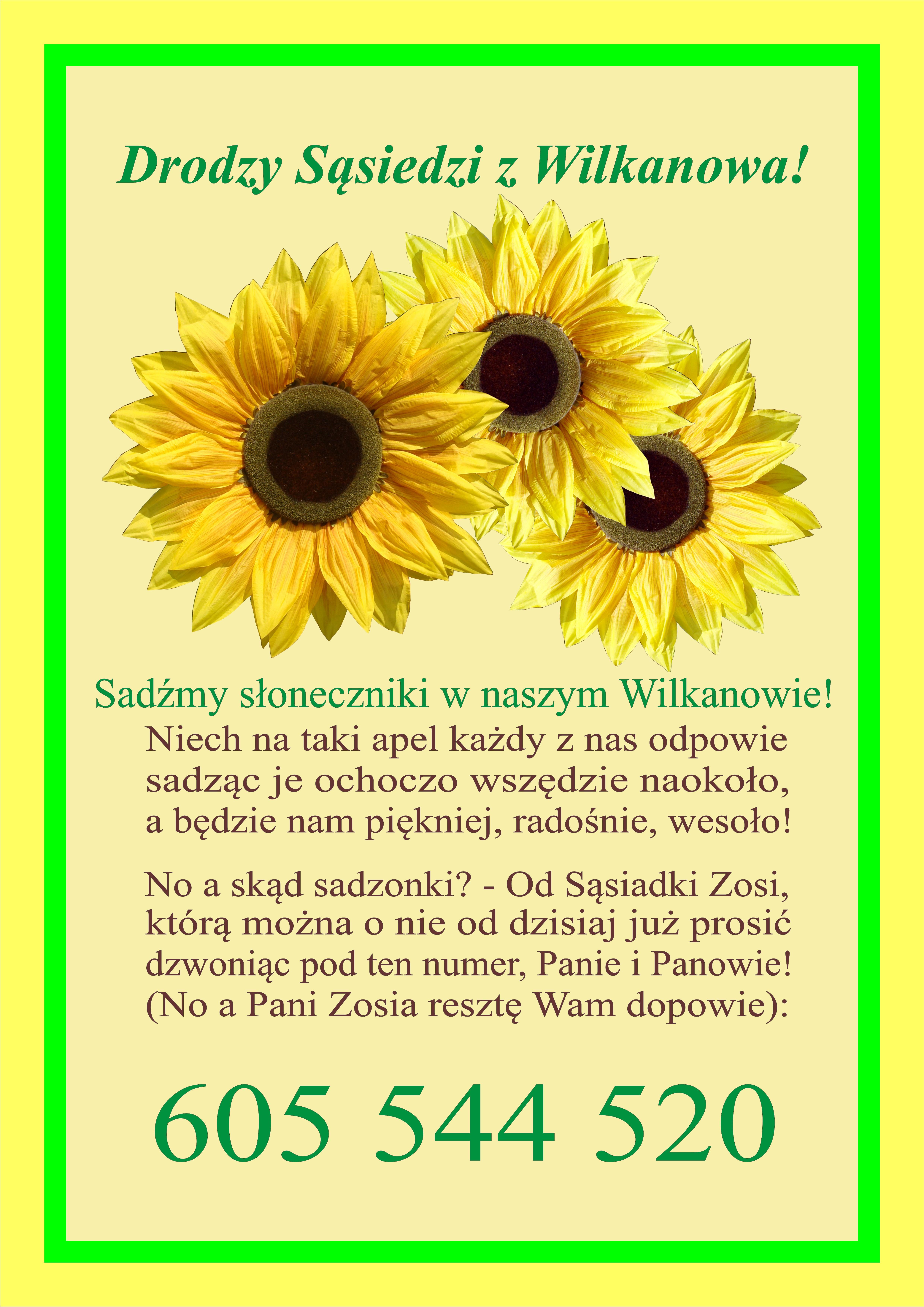 Ilustracja do informacji: Wilkanowo sadzi słoneczniki