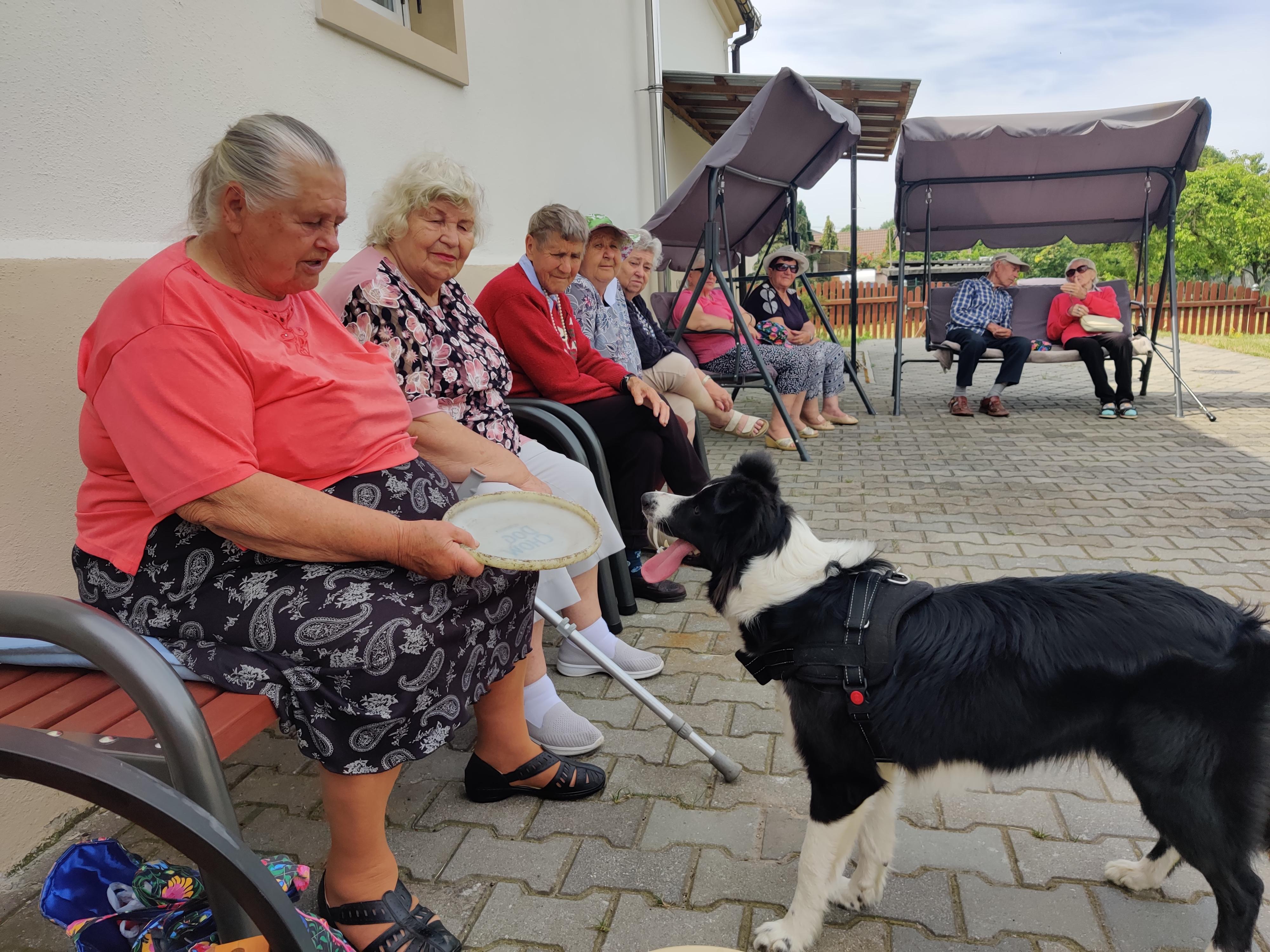 Ilustracja do informacji: Dogoterapia u Seniorów